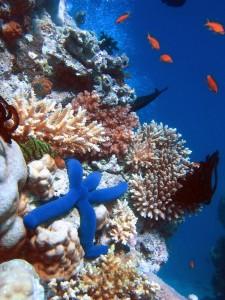 Коралловые рифы — пример горячей точки биоразнообразия