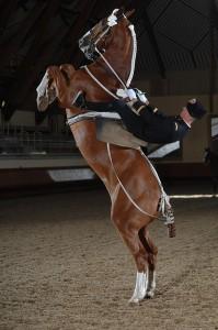 В элитной школе Кадр-Нуар сохраняются традиций французской верховой езды