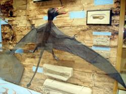 Rhamphorhynchus model