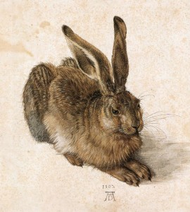 Feldhase (Dürer)